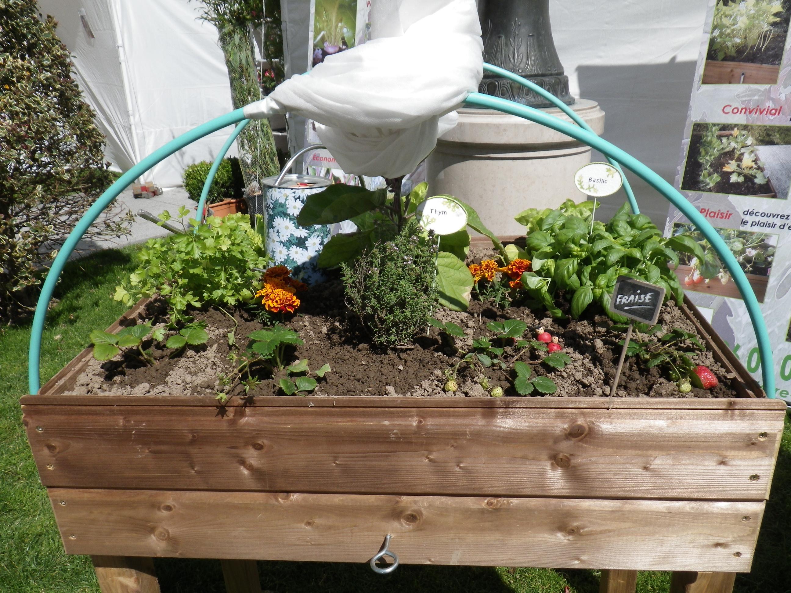 un mini potager la maison pour des herbes fruits et