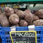 Une recette de crocodile aux macabos ? c'est ici http://bajag-mujabitsi.blogspot.fr/2010/06/crocodile-aux-macabos.html ! Il ne vous reste plus qu'à trouver de la viande de croco...