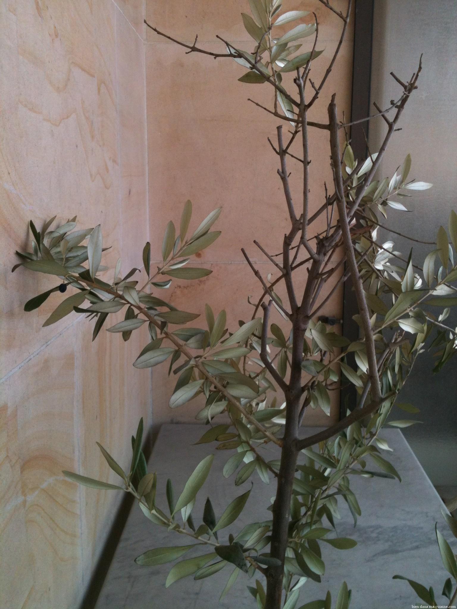 J ai une olive bien dans ma cuisine for J apprends a cuisiner