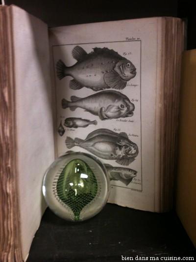 """Au rayon """"pêche"""", on apprend à reconnaître les poissons, qui ne sont pas des choses carrées et surgelées avec des yeux dans les coins."""