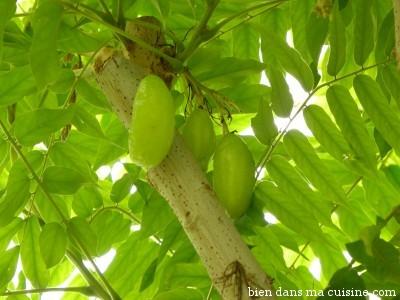 Un arbre à cornichons (non les cornichons ne poussent pas directement dans les bocaux !).