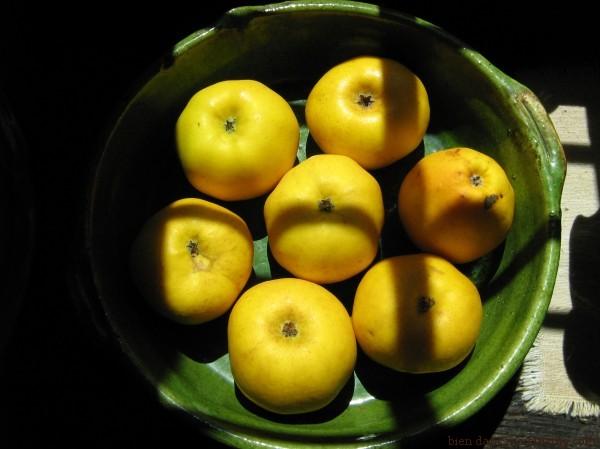 pommes dans compotier au soleil