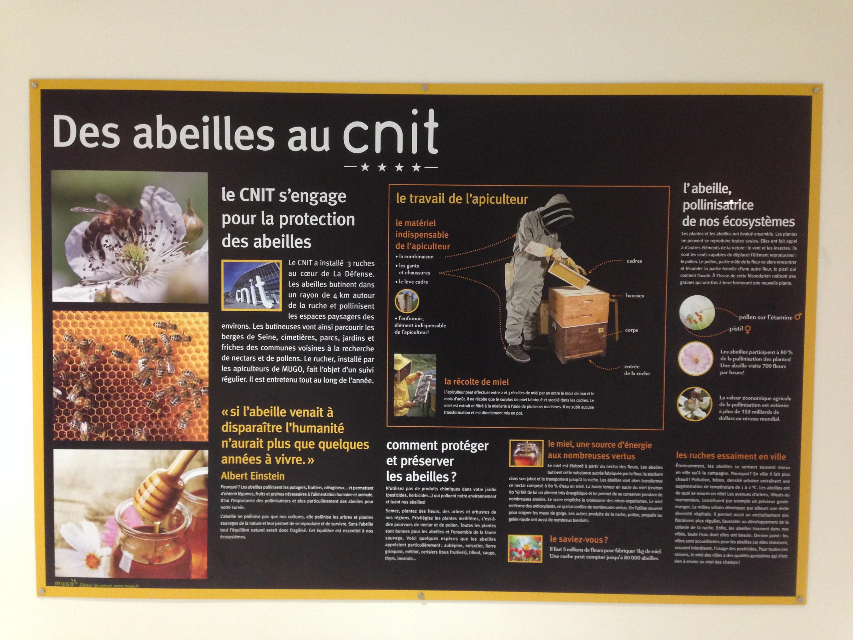 """Résultat de recherche d'images pour """"abeille des villes"""""""